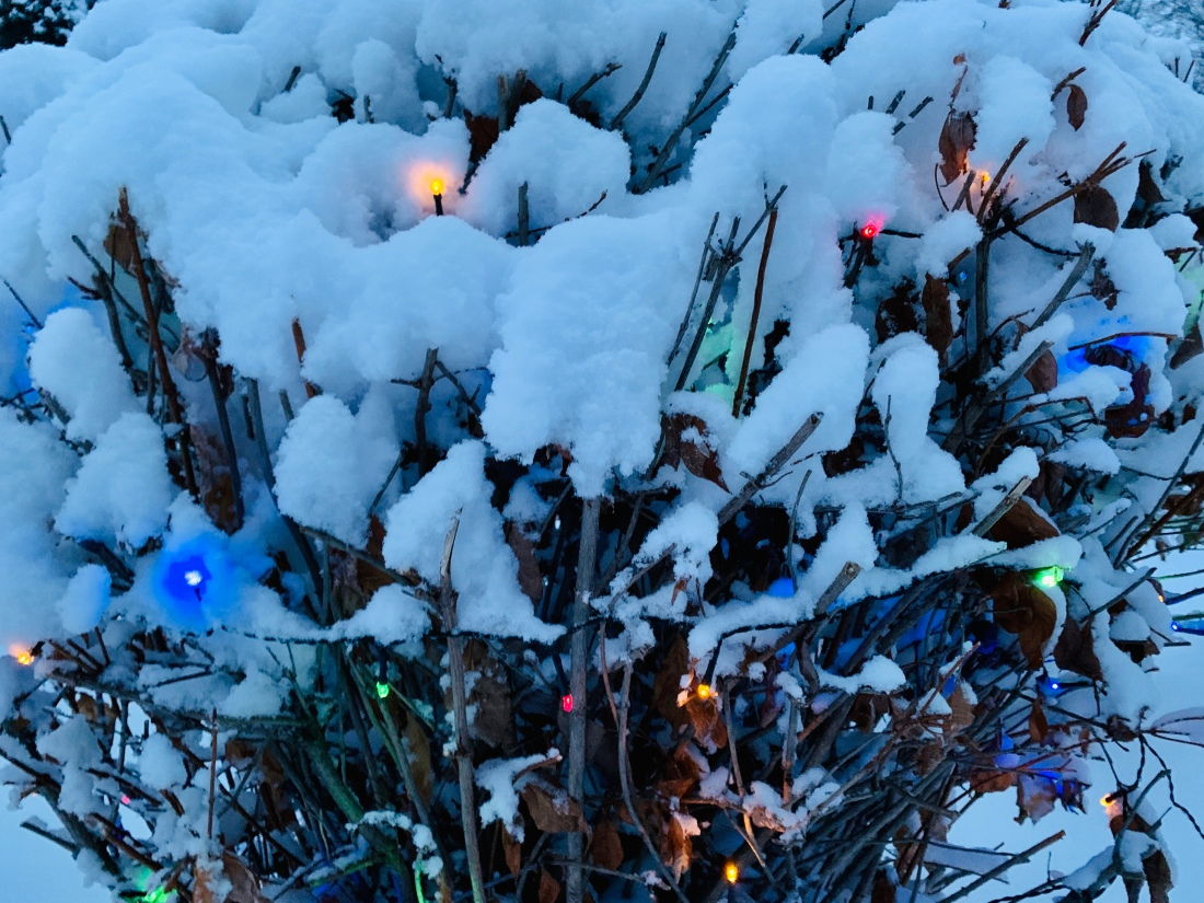Bush with Christmas lights covered in fresh snow